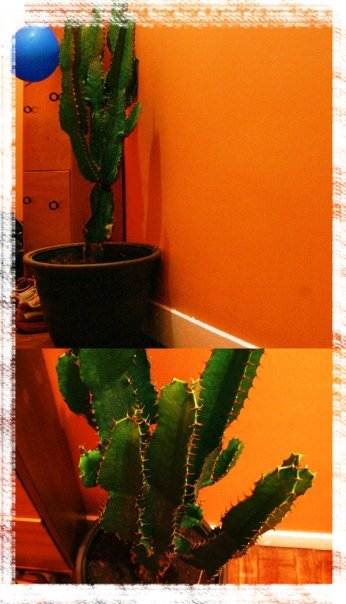 http://soofette.free.fr/2009NEW/cactus.jpg